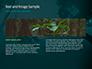 Rainforest Sunrise slide 14
