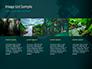 Rainforest Sunrise slide 16