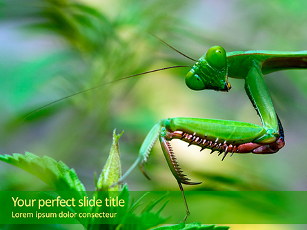 Mantis Presentation Template, Master Slide