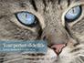 Siberian Cat slide 1