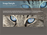 Siberian Cat slide 10