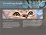 Siberian Cat slide 14