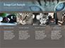 Siberian Cat slide 16