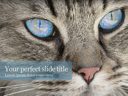 Siberian Cat Presentation Template, Master Slide