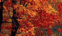 Beautiful Autumn Forest Presentation Template