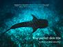 Whale Shark slide 1
