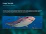 Whale Shark slide 10