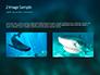 Whale Shark slide 11