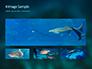 Whale Shark slide 13