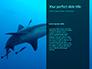 Whale Shark slide 9