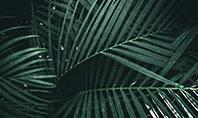 Palm Leaves Presentation Template