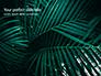 Palm Leaves slide 1