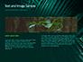 Palm Leaves slide 14