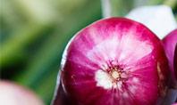 Onion Presentation Template
