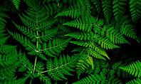 Fern Leaves Presentation Template