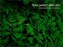 Fern Leaves slide 1