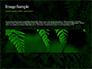 Fern Leaves slide 10