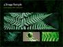 Fern Leaves slide 13