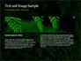 Fern Leaves slide 14