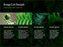 Fern Leaves slide 16