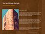 The Hieroglyphs of Ancient Egypt slide 15