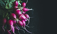 Bunch of Radish Presentation Template