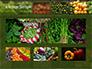 Vegetable Shop slide 13