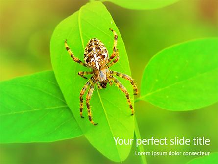 Crusader Spider Presentation Template, Master Slide