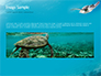 Marine Turtle slide 10