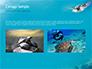 Marine Turtle slide 11