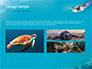 Marine Turtle slide 12