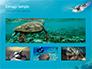 Marine Turtle slide 13