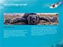 Marine Turtle slide 14