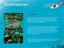 Marine Turtle slide 15