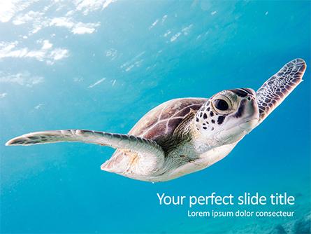 Marine Turtle Presentation Template, Master Slide
