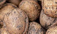 Walnuts Presentation Template