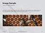 Wasp is Guarding its Nest Presentation slide 10