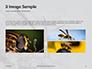 Wasp is Guarding its Nest Presentation slide 12