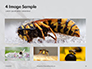 Wasp is Guarding its Nest Presentation slide 13
