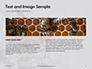 Wasp is Guarding its Nest Presentation slide 14