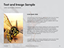 Wasp is Guarding its Nest Presentation slide 15