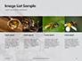 Wasp is Guarding its Nest Presentation slide 16