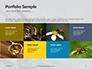 Wasp is Guarding its Nest Presentation slide 17