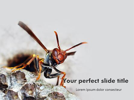 Wasp is Guarding its Nest Presentation Presentation Template, Master Slide
