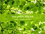 Green Tree Leaves in Sunlight Presentation slide 1