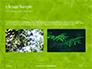 Green Tree Leaves in Sunlight Presentation slide 11