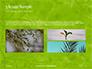 Green Tree Leaves in Sunlight Presentation slide 12