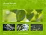 Green Tree Leaves in Sunlight Presentation slide 13
