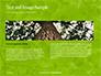 Green Tree Leaves in Sunlight Presentation slide 14