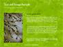 Green Tree Leaves in Sunlight Presentation slide 15